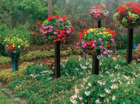 garden flower planting