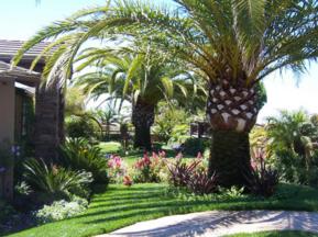 tropical-landscape-design