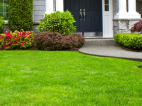 flower planting and yard maintenance